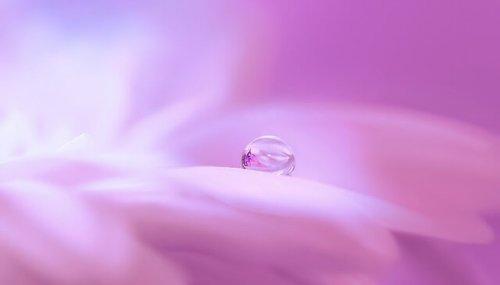 花びらの上の水滴