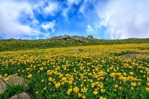 高原の画像